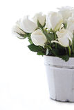 Weiße Rosen getrennt Stockfotografie