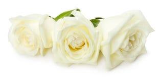 wei e rosen getrennt auf dem wei en hintergrund stockbild bild 5984801. Black Bedroom Furniture Sets. Home Design Ideas