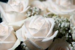 Weiße Rosen mit Tau Stockbilder