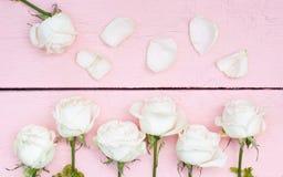 Weiße Rosen und Blumenblätter Stockfoto