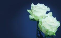 Weiße Rosen und Kopienraum Stockbilder