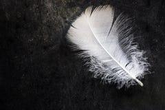 Weiße saubere empfindliche Vogelfeder auf schwarzem konkretem Steinhintergrund, Kontrast, Reinheit, Gleichgewicht stockfoto
