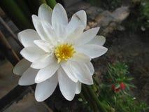Weiße schöne Blume lizenzfreie stockbilder