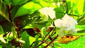 Weiße schöne Blume stockbild