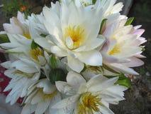Weiße schöne Hintergrundblume lizenzfreie stockfotos