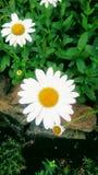Weiße Schönheit! lizenzfreie stockfotos