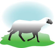 Weiße Schafe Stockfoto
