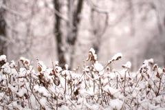 Weiße Schnee-Lüge auf Büschen im Winter Parke Stockbild