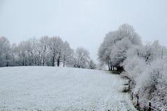 Weiße schneebedeckte Rollenwiese mit Bäumen mit Schnee Lizenzfreies Stockbild