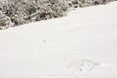 Weiße schneebedeckte Steigung durch den Wald, natürliche Szene Stockbild