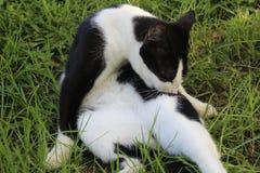 Weiße schwarze Katze im Yard Stockbild