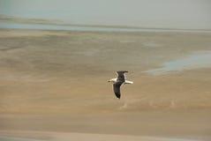 Weiße Seemöwe, die über atlantischen Strand fliegt Lizenzfreies Stockbild