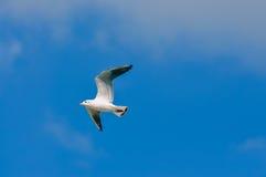 Weiße Seemöwen, die in den blauen sonnigen Himmel fliegen lizenzfreies stockfoto