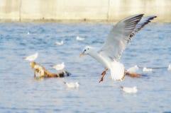Weiße Seemöwen nahe stützen unter Lizenzfreies Stockbild