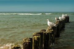 Weiße Seemöwen zwei Lizenzfreie Stockfotos
