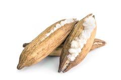 Weiße silk Baumwolle lizenzfreies stockfoto