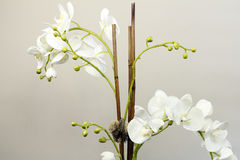 Weiße Silk Orchidee blüht Anlage Stockfotografie