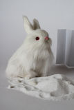 Weiße Spielzeughasen in einem weißen Hintergrund Stockfoto