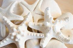 Weiße Starfish Stockbilder