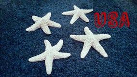 Weiße Starfish Stockfoto