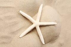 Weiße Starfish auf einem Sandhintergrund. Abschluss oben. Stockfoto