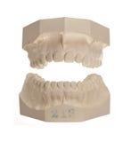 Weiße Steinbaumuster der Zähne Lizenzfreie Stockfotografie
