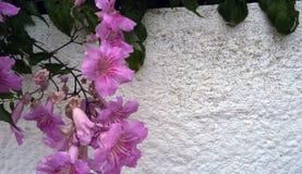 Weiße Steinwand mit lila Blumen stockfotos