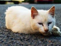 Weiße Straßenkatze Lizenzfreie Stockfotografie