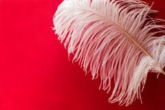 Weiße Straußfeder auf einem roten Hintergrund stockfotos