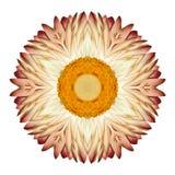 Weiße Straw Mandala Flower Kaleidoscopic Isolated auf Weiß Lizenzfreies Stockbild