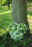 Weiße Sympathieblumen nahe einem Baum Stockfoto