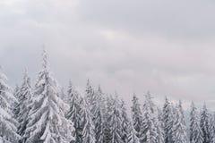 Weiße Tannenbäume bedeckt durch Schnee Wintermärchenlandlandschaft Stockbild