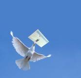 Weiße Taube Stockfoto