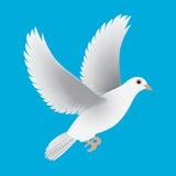 Weiße Taube lokalisierter blauer Vektor Stockbild