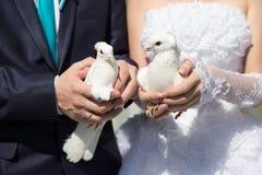 Weiße Tauben Lizenzfreie Stockfotografie