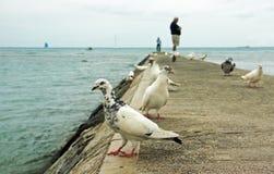 Weiße Tauben auf Pier Lizenzfreie Stockfotos