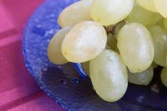 Weiße Trauben mit Tropfen des Taus Stockfoto