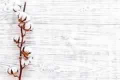 Weiße Trockenblumen von Baumwolle auf weißem hölzernem Draufsicht-Kopienraum des Hintergrundes lizenzfreie stockfotos