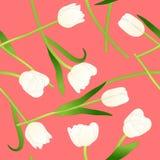 Weiße Tulpe auf rosa Hintergrund Auch im corel abgehobenen Betrag vektor abbildung