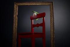 Weiße Tulpe auf rotem Stuhl im Anstrichfeld Lizenzfreies Stockfoto