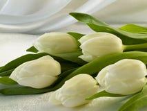Weiße Tulpen Stockbild