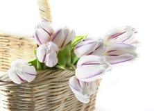 Weiße Tulpen Lizenzfreie Stockfotos