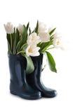 Weiße Tulpen in den Gummimatten Lizenzfreie Stockbilder