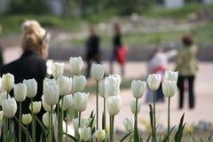 Weiße Tulpen und Leute, die hinter die gehen lizenzfreies stockbild
