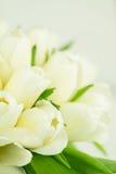Weiße Tulpenanordnung Stockbild