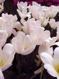 Weiße u. rosa Blumen stockfoto
