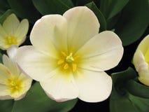 Weiße u. rosafarbene Blumen Lizenzfreie Stockfotos