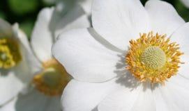 Weiße und gelbe Blumen Lizenzfreie Stockbilder