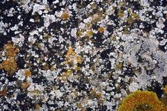 weiße und gelbe Flechten auf Stein stockfotos