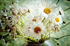 Weiße und gelbe Gänseblümchen im Vasenabschluß oben gegen unscharfes backgr Stockbilder